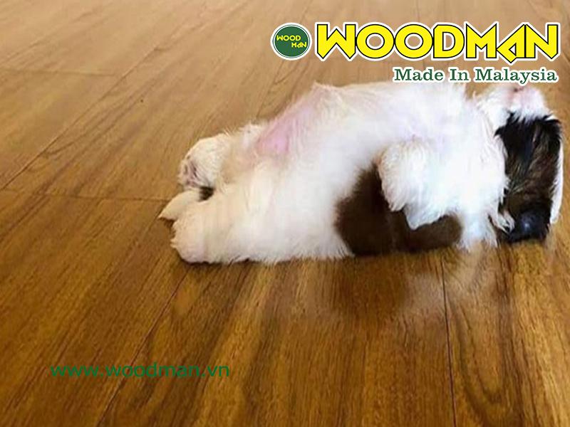 Sàn gỗ Malaysia phù hợp với việc nuôi thú cưng trong nhà