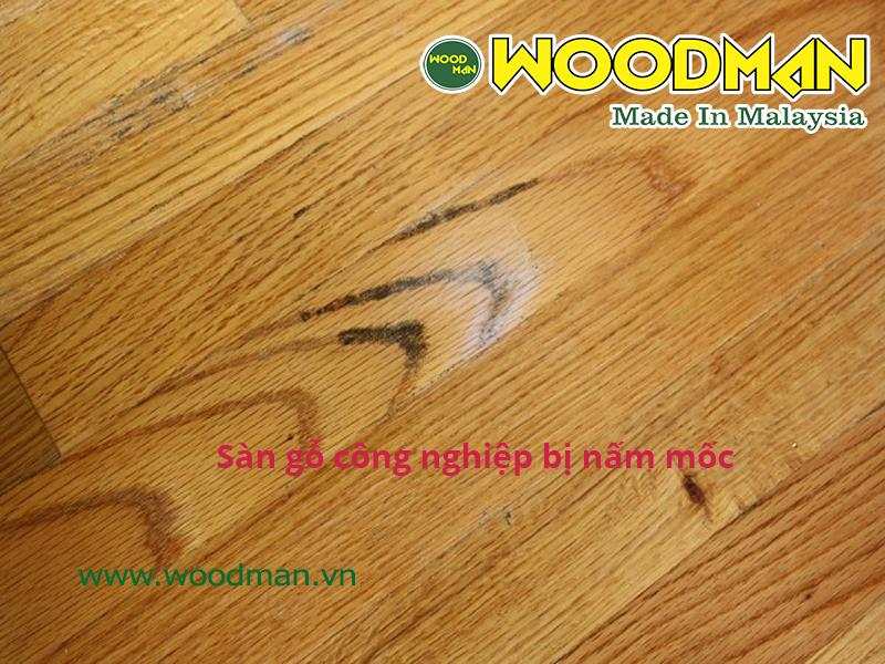 Hình ảnh sàn gỗ công nghiệp bị nấm mốc trong quá trình sử dụng